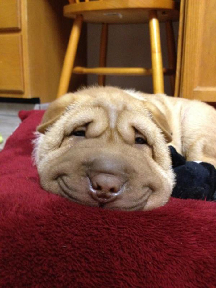 post-the-happiest-dogs-who-show-the-best-smiles-18__700